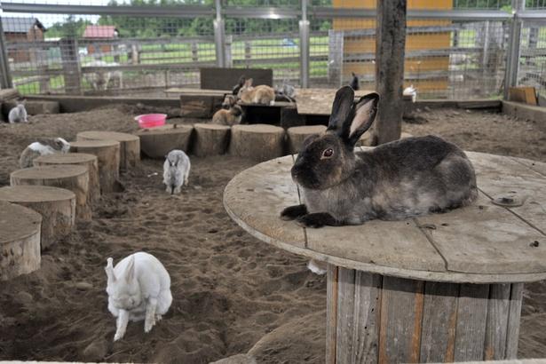 「ひつじの丘」/ウサギ牧場