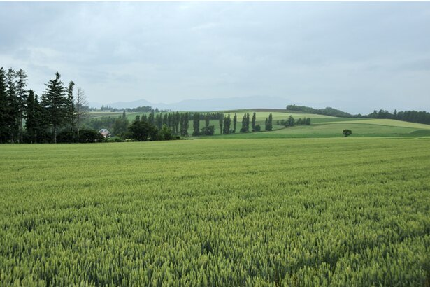 「ひつじの丘」から眺めるベベルイの風景