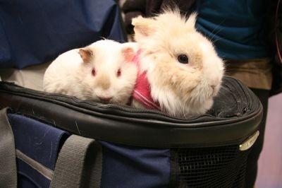 【キュートな動物たちの画像が続々!】「Pet博2009 in東京」