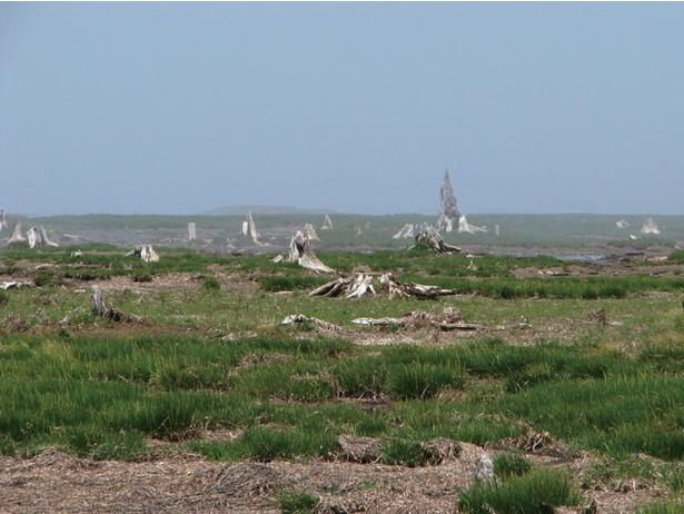 野付半島の名所の一つといえば、トドワラ
