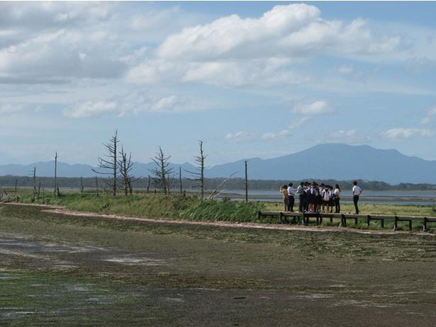 野付半島のトドワラの景色。年々風化が進行し、その風景は貴重になりつつあります