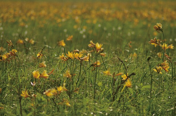 湿地としての国際的評価も高く、1993年にはラムサール条約に登録されています
