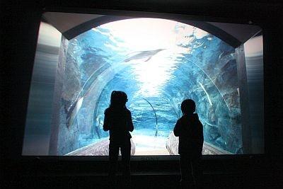 ペンギンたちが泳ぐトンネルが登場!