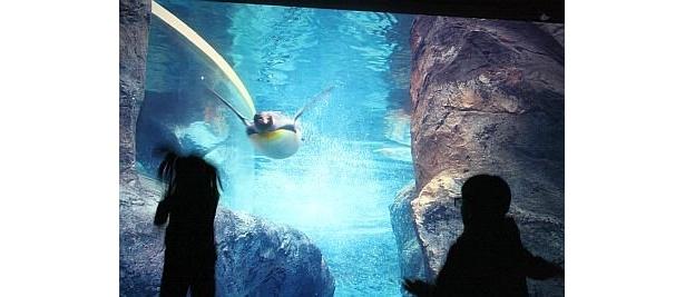 まるで水中を飛んでいるかのよう!