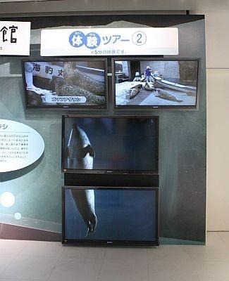 あざらし館のもぐもぐタイムを再現。2つのスクリーンにわたって泳ぐアザラシが映し出されているのが分かる?