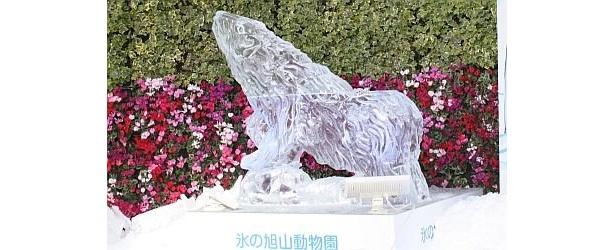 屋外では、12/24(木)16:00〜18:00にアザラシ、2010年1/2(土)はトラの氷の彫刻制作を実演する