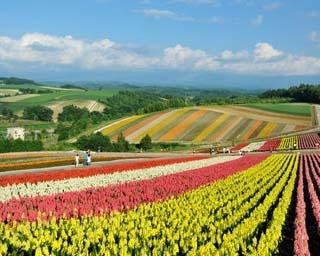 美瑛「四季彩の丘」の風景