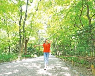 約3万6000坪の広大な森は、自生するケヤキやエノキといった広葉樹が中心で、なかには樹齢600年もの古木も/糺の森(下鴨神社)