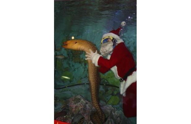 """12月25日なので""""サンタさんダイバー""""も登場!でっかい「ドクウツボ」と一緒に"""