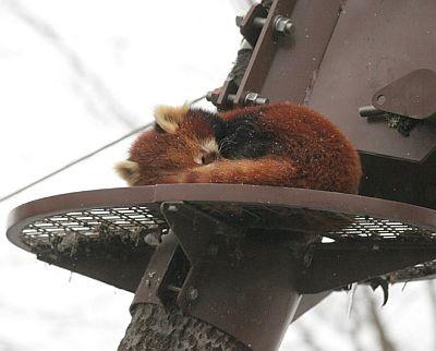 【しっぽを丸めて眠る姿がかわいすぎっ!!】