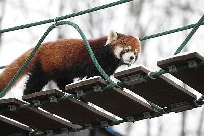 吊り橋は約3.5mの高さの場所にある。取り囲む人々を観察しながらわたることも。上手に渡れるかな?