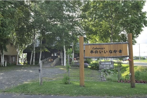 「caferest木のいいなかま」は丘の町・美瑛の市街地にある