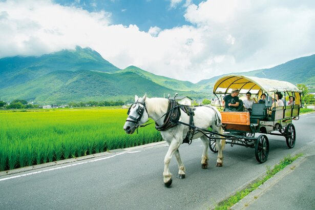 現在は由布院観光の名物。馬車に揺られてのんびりできる