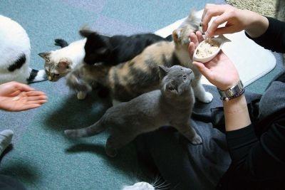 ネコにおやつをあげる毎年恒例のイベント【猫のまほう 東京西五反田店】