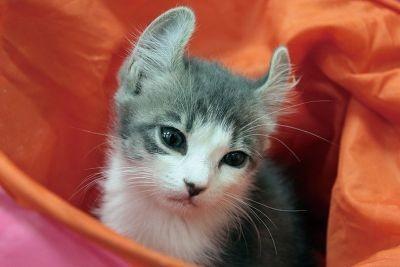 茶トラネコのほか約10種類15匹のネコがいる【猫のまほう 東京西五反田店】