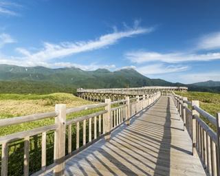 全長800mある高架木道