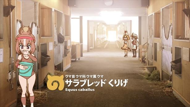 サーバルやかばんも登場!JRA×「けものフレンズ」コラボ第2弾のスペシャル動画が公開!!
