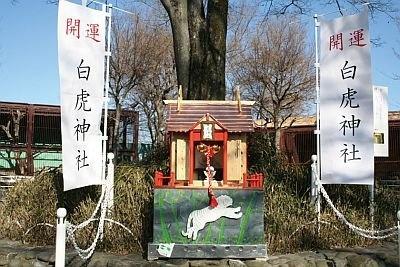 ホワイトタイガーが動物園に来る時に入っていた木箱を使用した「白虎神社」が3月14日(日)まで設置される/東武動物公園