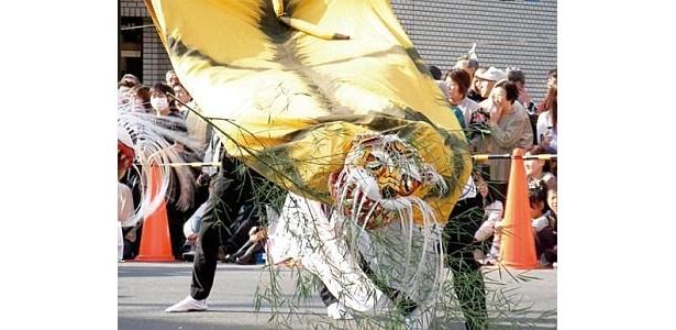 岩手県・釜石に伝わる伝統芸能、虎舞が登場。トラの動きを見事に表現した舞に酔おう。1月2日(土)・3日(日)の11:30〜、14:00〜開催予定/東武動物公園