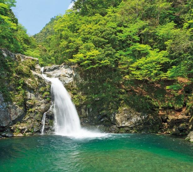 十津川村の山中に突如現れる名瀑。滝壺周辺に、舞い上がる水しぶきは天然のミスト/清納の滝