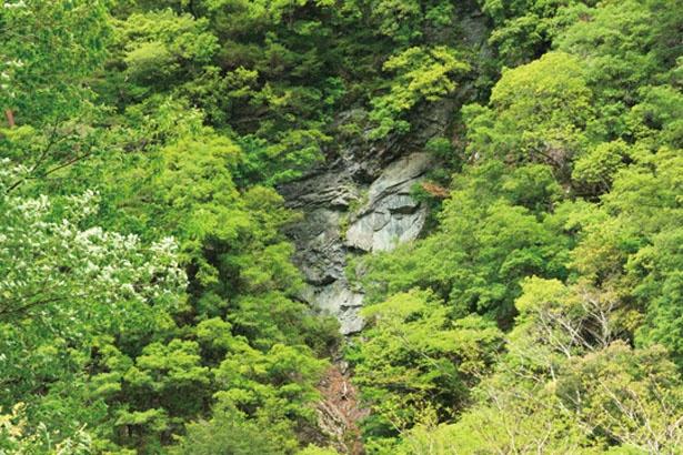 【写真を見る】清納の滝近くの「大野出合のヴィーナス」と呼ばれる顔面岩/清納の滝