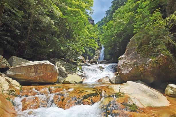 「日本の滝百選」の一つの笹の滝。岩肌を流れる白糸のような落差32mの滝は迫力満点だ/十津川村