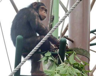 旭山動物園・「チンパンジーの森」と来園客
