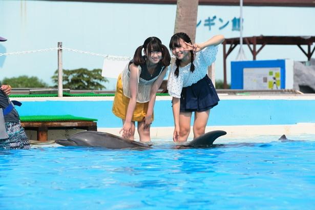 夏季限定で開催されているプールの中に入ってイルカに触ることができるイベント(1人500円)