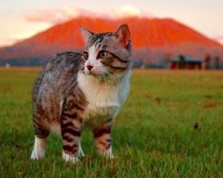 """ネコ写真多数!鹿児島育ちの""""旅する猫""""が海外でも話題に"""