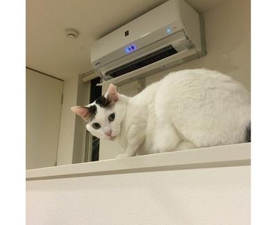 【写真を見る】エアコンの真下に陣取るネコ「官兵衛」