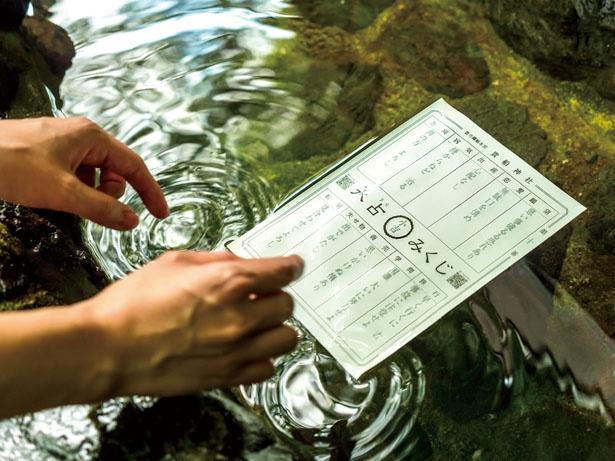 【写真を見る】「水占みくじ」(200円)は、ご神水に浸すと文字が浮かび上がる/貴船神社
