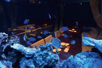 水槽のブルーライトで大人ムード/「AQUA GARDEN 個室ダイニング〜水の庭〜」