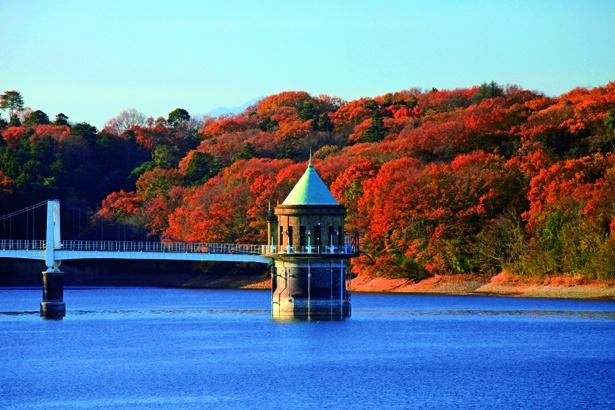 正式には「山口貯水池」という1934年に造られた人造湖。水鳥が多く集まる