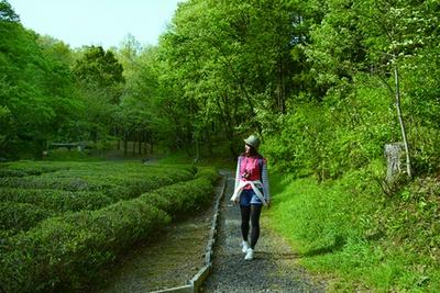 竹林と雑木林が茂る「トトロの森3・15号地」。ハイキングに最適!