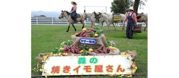 馬が力を合わせてイモを運んでくる