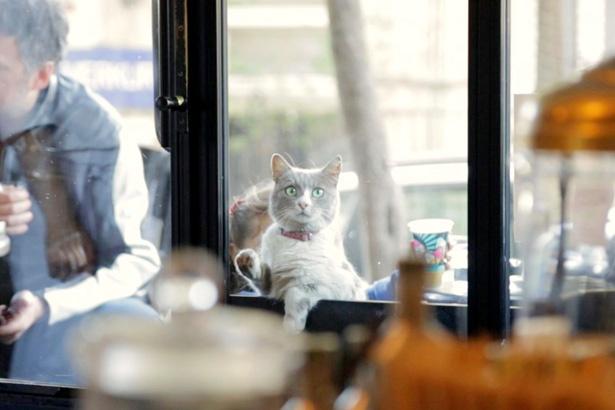 【写真を見る】美食家のデュマンは高級な食材しか食べない!?