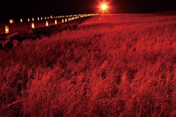 【写真を見る】まるでレッドカーペット!?日本が誇る、海の紅葉名所へようこそ!