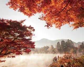 真っ赤な木々と朝霧がコラボレーション
