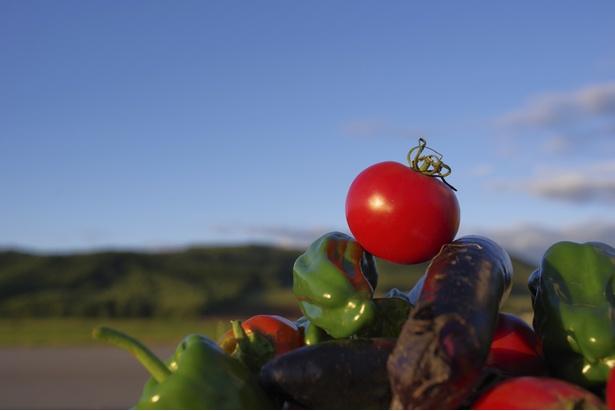 野菜を広めるためにも「ブランド化」は欠かせない。