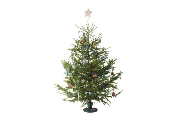 生木クリスマスツリー1990円(オーナメントは含まず)