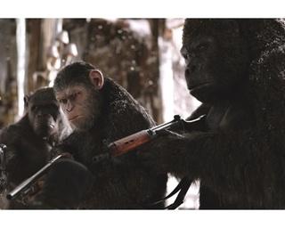 猿は人間に危害を加えませんが、人間が執拗に攻撃してくるので猿も応戦せざるをえません