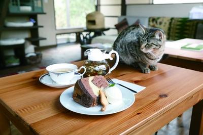 特製三毛猫シフォンケーキ486円、モーリス・メセゲのハーブティー648円で優雅にティータイム
