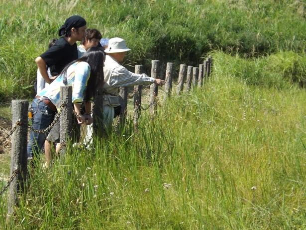 【写真を見る】草原や湿原に咲く秋の植物を観察できる