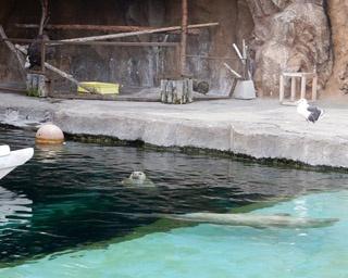 旭山動物園・「あざらし館」/館内にある円柱水槽「マリンウェイ」
