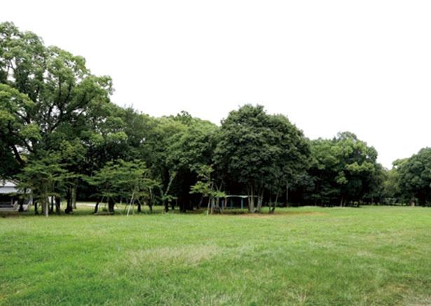 森林遊苑は、緑に囲まれながらくつろげる、開放的な空間/橿原神宮