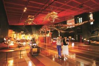 貴重な動植物化石を壮大な スケールで展示する化石展示室