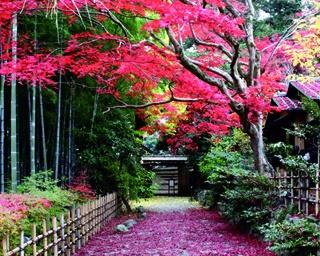 11/18(土)~12/3(日)にイベント「錦秋染まる旧古河庭園」を開催予定