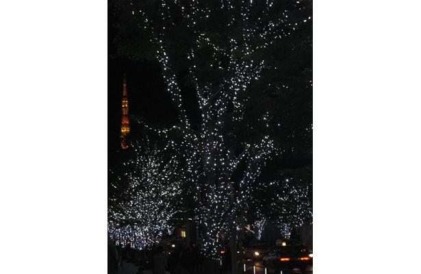 東京タワーの見えるイルミネーション