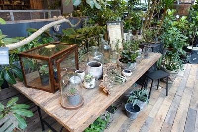 【写真を見る】自然光が差し込み、柔らかな雰囲気が漂う4階。多種多様な植物がところ狭しと置かれている