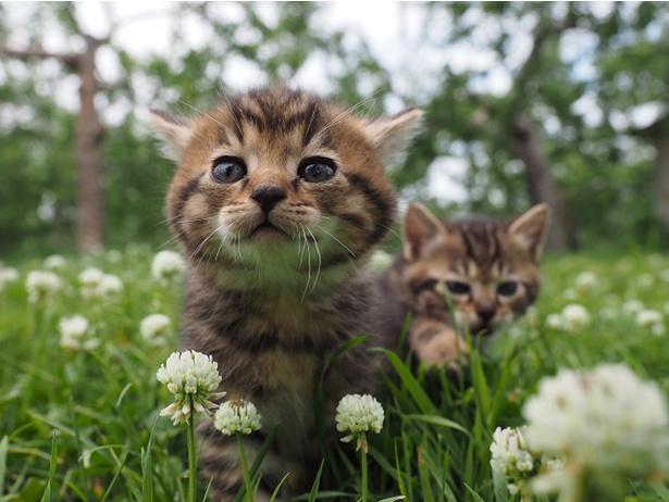 10月21日(土)公開の『劇場版 岩合光昭の世界ネコ歩き コトラ家族と世界のいいコたち』